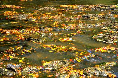 Swamps, Rivers, Creeks, Streams, etc
